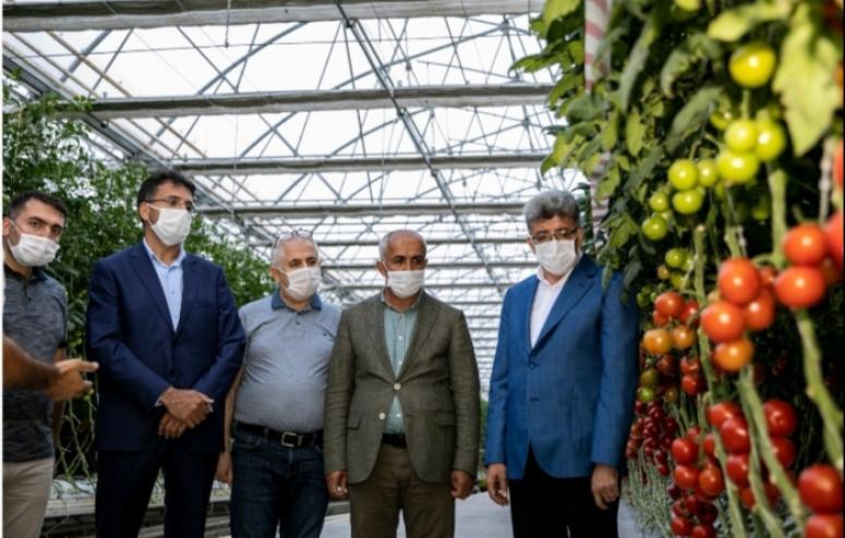 Vali Bilmez, Çaldıran'daki seralarda incelemelerde bulundu