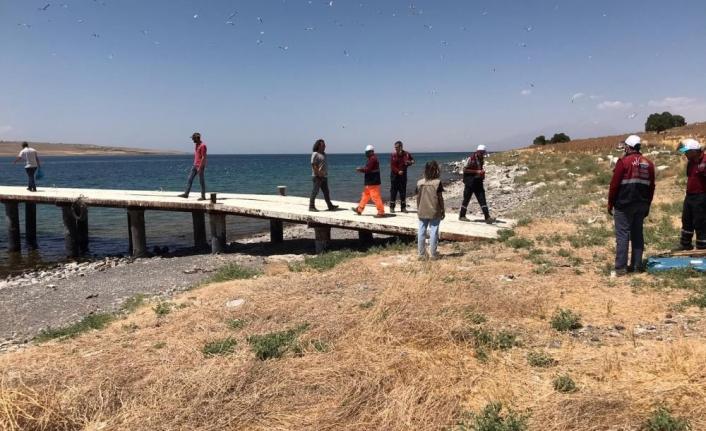 Adır Adası'ndaki ölü martılar toplatıldı