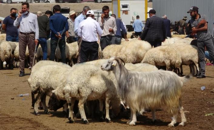 Canlı hayvan pazarında yoğunluk arttı