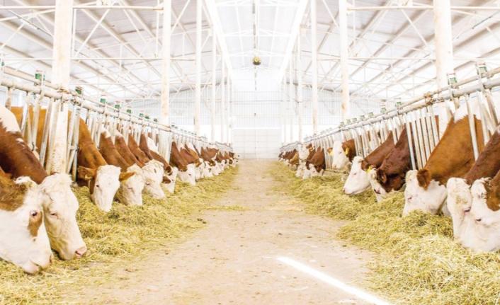 Hayvancılık işletmelerine yüzde 50 hibe desteği…
