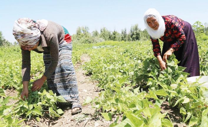 Bakanlık ve DAKA'dan Gevaş Belediyesi'nin projesine destek…