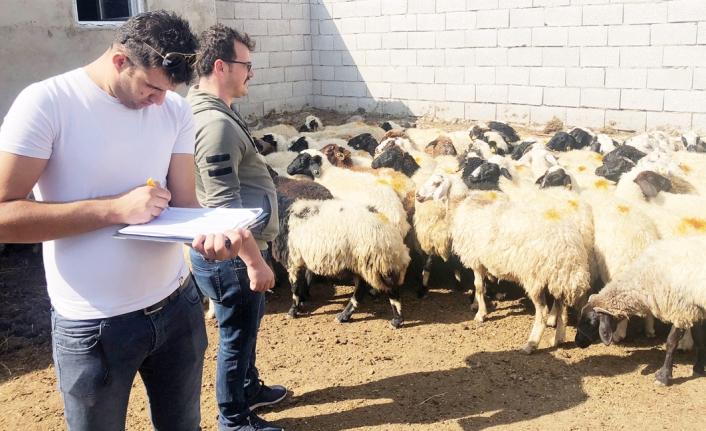 Çaldıranlı çiftçilere hayvan desteği verildi
