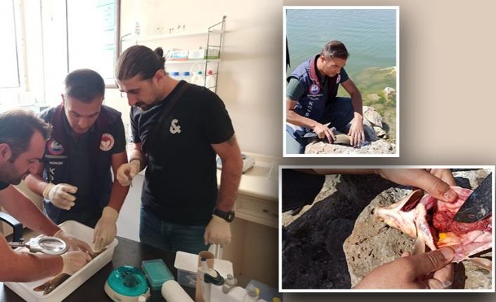 Van'da balık ölümlerinin görüldüğü sularda numuneler alındı
