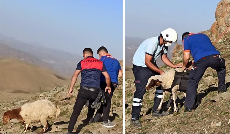 İtfaiye ekipleri, kayalıklarda sıkışan koyun sürüsü için seferber oldu