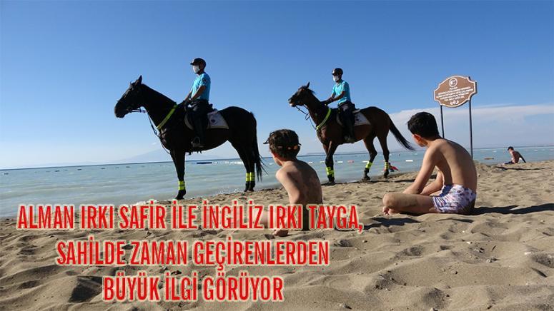Van Gölü sahillerinde atlı birlikler...