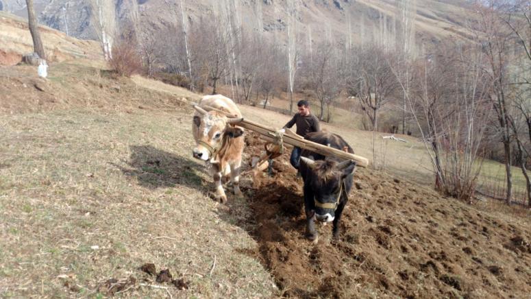 Bahçesaray'da karasabanlı tarım hayatı sürüyor
