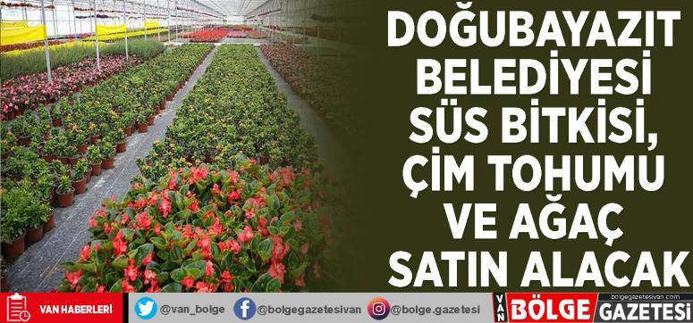 Doğubayazıt Belediyesi süs bitkisi, çim tohumu ve ağaç satın alacak