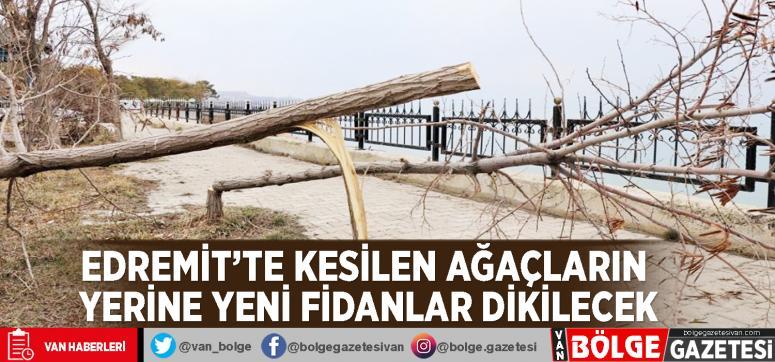 Edremit'te kesilen ağaçların yerine yeni fidanlar dikilecek