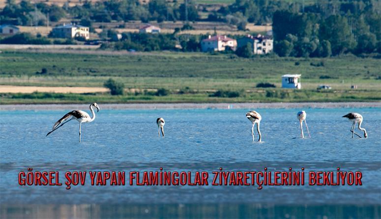 Van Gölü'nde flamingolardan görsel şölen...