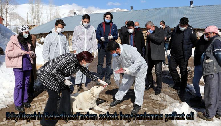 Büyükşehir ekipleri, sokak hayvanlarına ilaç veriyor