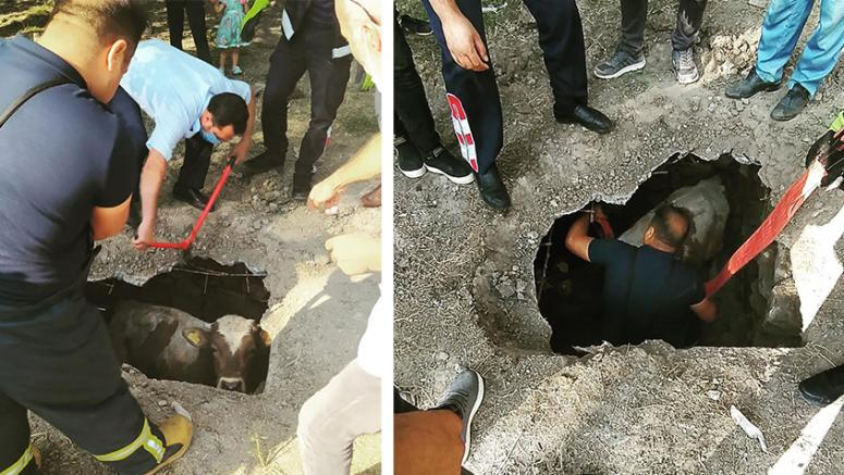 Tuşba'da, kuyuya düşen inek kurtarıldı