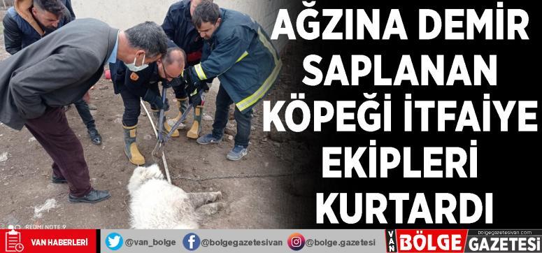 Ağzına demir saplanan köpeği itfaiye ekipleri kurtardı