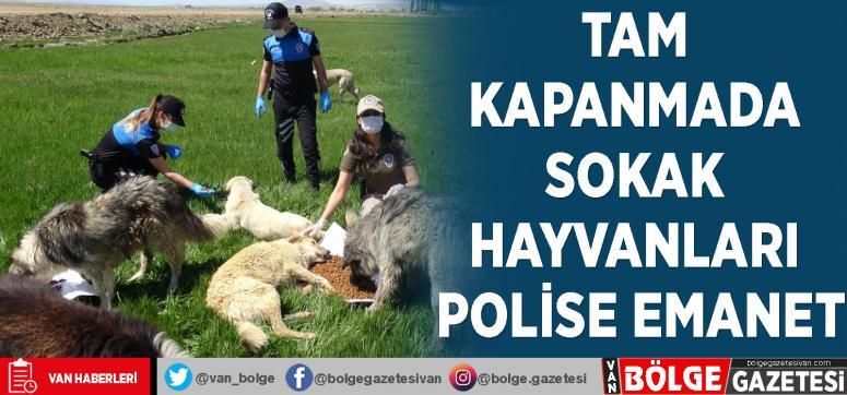 Tam kapanmada sokak hayvanları polise emanet