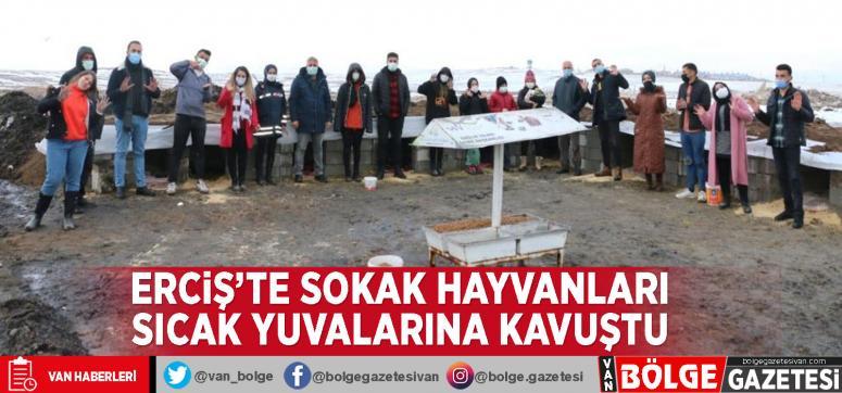 Erciş'te sokak hayvanları sıcak yuvalarına kavuştu