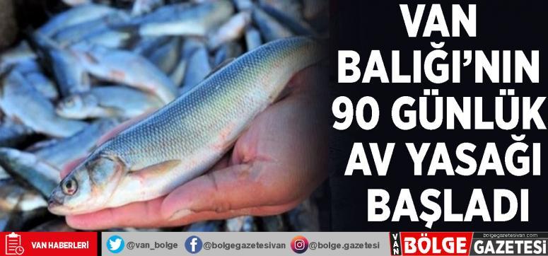 Van Balığı'nın 90 günlük av yasağı başladı