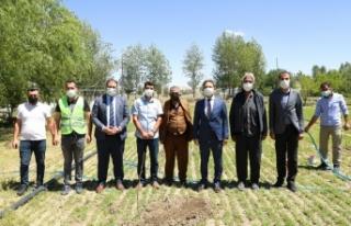 İpekyolu'ndaki çiftçilere ceviz fidanı dağıtıldı