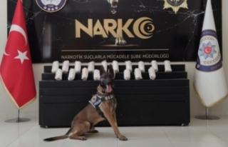 Polis köpeği Bobi uyuşturucuya geçit vermiyor