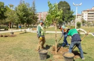 İpekyolu'nda park ve refüj alanları ağaçlandırılıyor