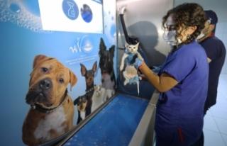 Van'da 6 ayda 147 sokak hayvanı sahiplendirildi