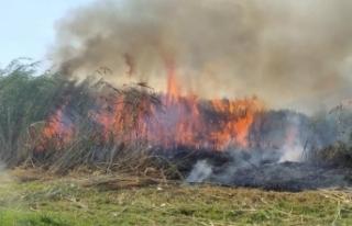Muradiye'de sazlık alanda yangın