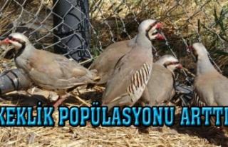 Av yasakları sayesinde keklik popülasyonu arttı