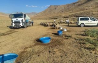 Gürpınar Belediyesi susuz kalan koyun sürüsü...