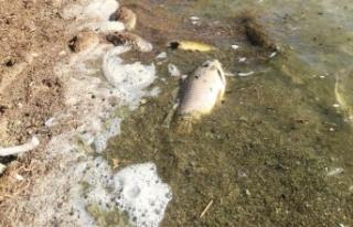 Van'da toplu balık ölümleri endişelendiriyor