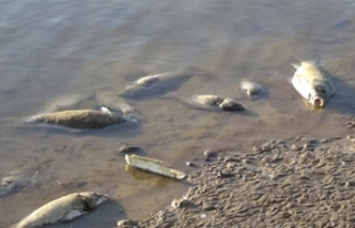 Van'daki balık ölümlerinin nedeni belli oldu