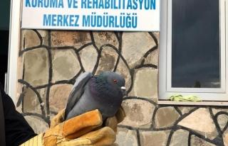 Yaralı kuşlar tedavi ediliyor