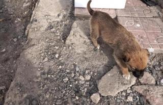Başkale Belediyesi yavru köpeklere sahip çıktı