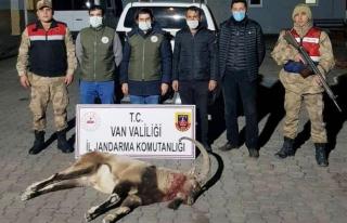 Başkale'de yaban keçisi avlayanlar cezalandırıldı