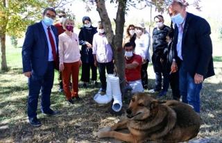 Birlik Vakfı Van Şubesi'nden, sokak hayvanlarına...