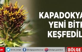 Kapadokya'da yeni bitki keşfedildi