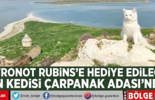 Astronot Rubins'e hediye edilecek Van kedisi...
