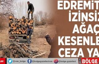 Edremit'te izinsiz ağaç kesenlere ceza yağdı