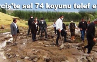 Erciş'teki selde 74 koyun telef oldu