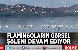 Flamingoların görsel şöleni devam ediyor