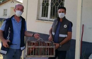 Erciş'te kaçak keklik avlayanlara ceza...