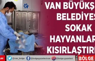 Van Büyükşehir Belediyesi Sokak hayvanlarını...