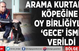 Arama kurtarma köpeğine oy birliğiyle 'Gece'...