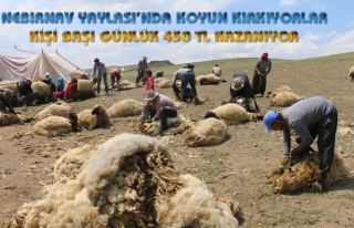 Hakkari-Van sınırındaki yaylada koyun kırkıyorlar