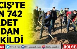 Erciş'te bin 742 adet fidan dikildi
