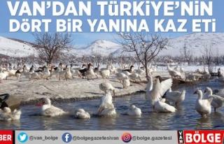 Van'dan Türkiye'nin dört bir yanına kaz...