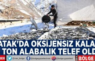 Çatak'ta oksijensiz kalan 12 ton alabalık telef...