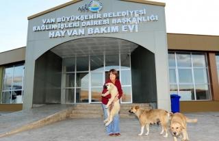 Van'da bir yılda 162 sokak hayvanı sahiplendirildi