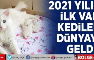 2021 yılının ilk Van kedileri dünyaya geldi