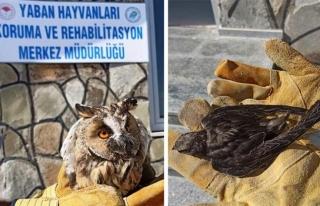 Yaralı halde bulunan kuşların tedavisi sürüyor