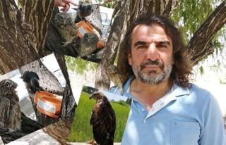 Van'da 6 ayda 200 yaban hayvanı tedavi edildi